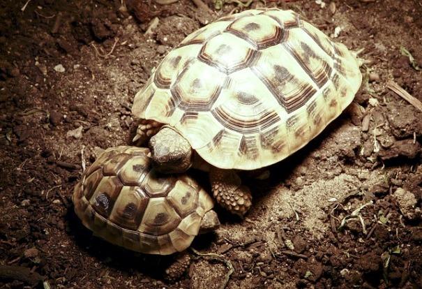The Creation Story – Turtle Island - creation_story.pdf